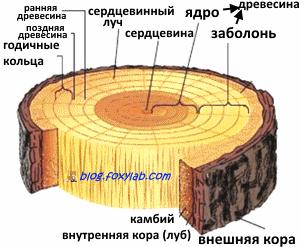 состав древесины