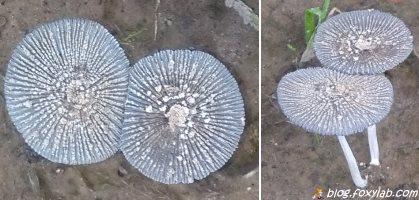 грибы в саду